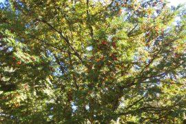 9月の行事 ①紅葉狩り